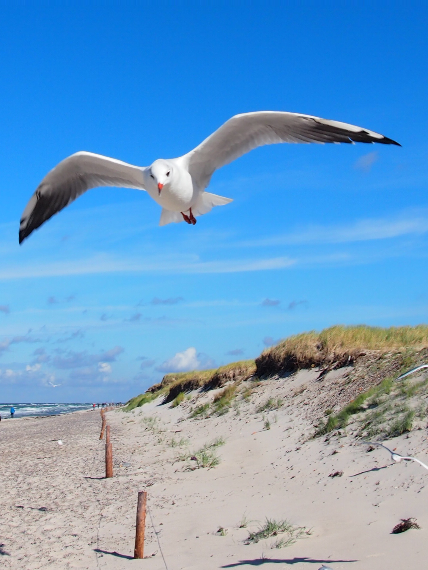 Seagulls follow your every step at the Baltic Sea Coast