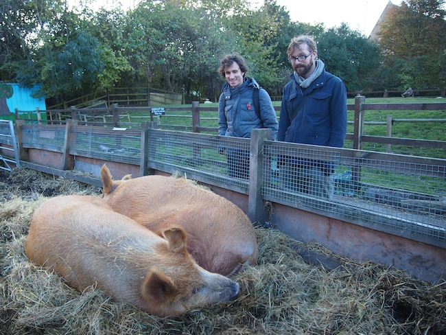 Grunting pigs at Hackney City Farm, East London: Well worth the (free) visit!