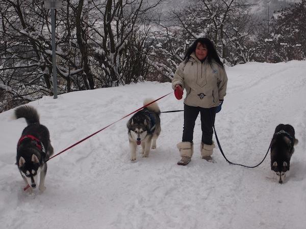 Neben süßen Huskies & freundlichen Spaziergängern ...