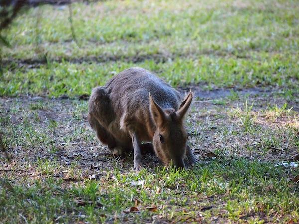 Der angrenzende Zoologische Garten lädt zu Rätselspielen ein: Wer oder was ist bitteschön dieses kleine, putzige Etwas?