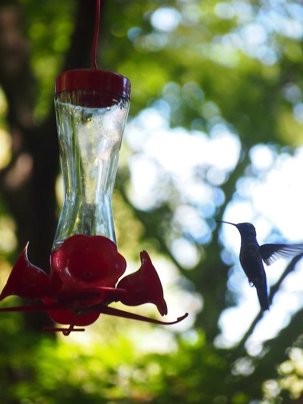 """Auch Kolibris nehmen hier gerne """"Platz"""", angezogen von den roten Plastikblumen im Garten. Wir staunen ob der winzigen und außergewöhnlichen Vögel, welche den Einheimischen hier nicht mehr als ein müdes Lächeln abringen."""