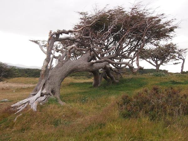 """Der """"Fahnenbaum"""" Argentiniens ist als Postkartenbild weit über die Grenzen des Landes hinaus bekannt. :)"""