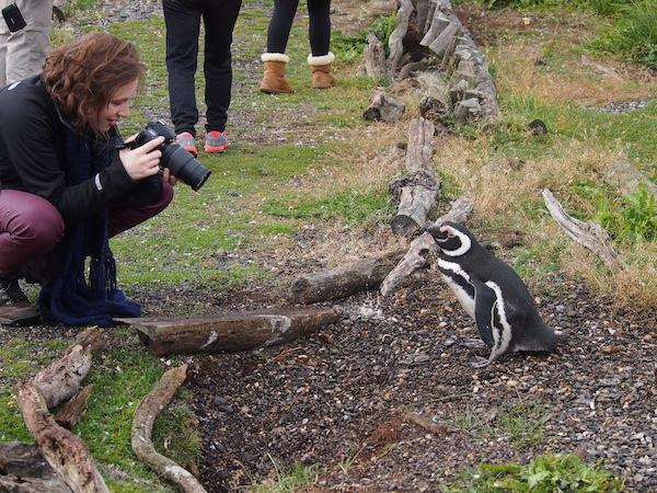 Im Rahmen unserer Führung über die Insel kommen wir auf gut markierten Wegen bis auf wenige (Zenti)Meter an die Pinguine heran!