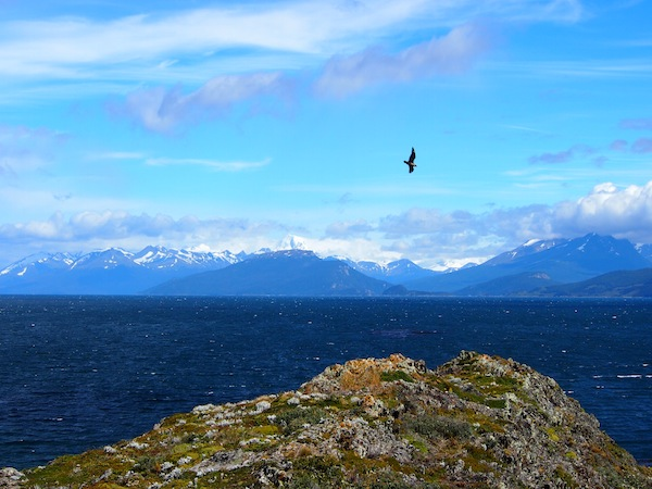 A sailing excursion on Canal Beagle, off the city of Ushuaia, allows for wonderful vistas, exceptional bird & plant life on nearby islands and is a must for any trip to this area.