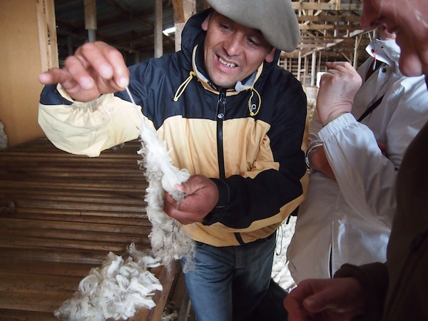 "Our host and his family are happy to demonstrate the quality of their Merino sheep, which they shear every year in spring and summer and whose ""cordero"" (lamb) we are enjoying for lunch ..."