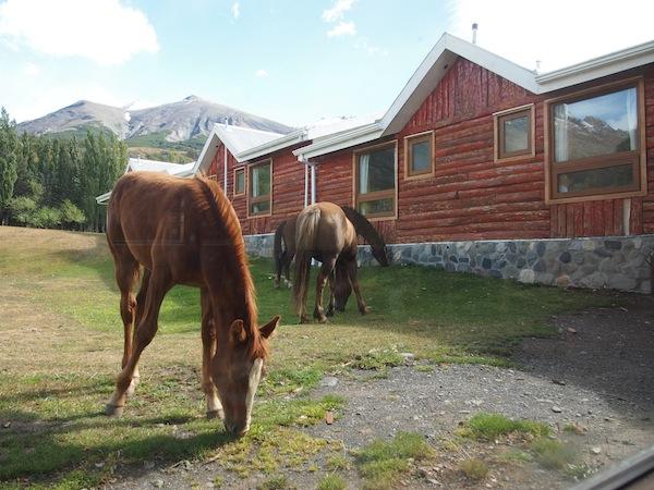 Pferde grasen hier direkt vor dem Fenster; mehr als 150 zählt das Hotel für Ausritte und als Packpferde für die umliegenden Lodges!