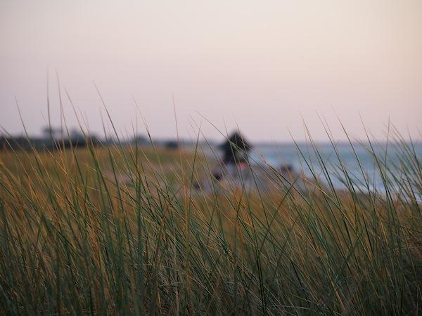 I love it: Sanfte Grashalme im Wind am Meer, ein unbeschreibliches Gefühl des Friedens, der Ruhe und der Schönheit.