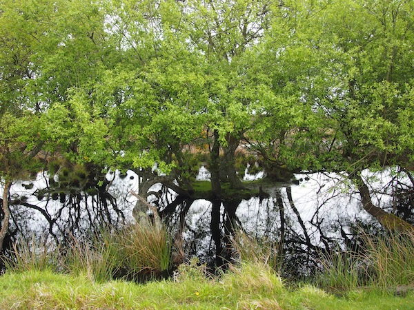 """Die Moorlandschaft (""""Studland Heath"""") gleich hinter dem Strand lädt zu ausgedehnten Naturspaziergängen ein."""