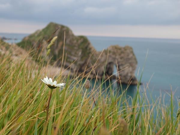 Hier träumt einfach jeder gerne ... Blick bäuchlings vom Gras auf die Küste!