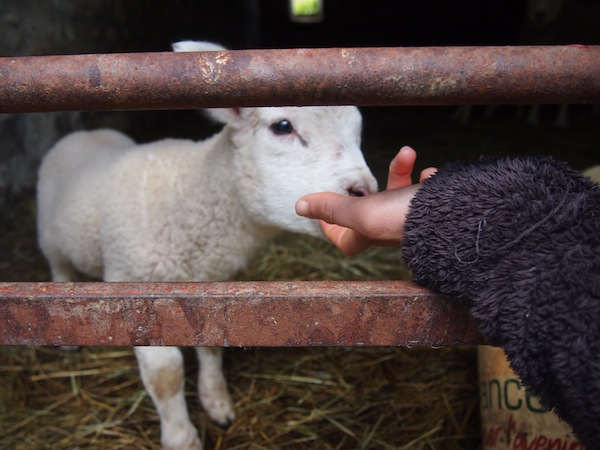 Julien's family has a farm, so we visit the newborn members of the family!