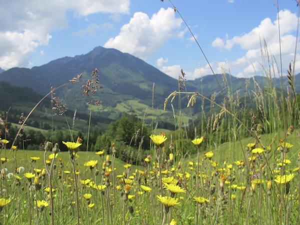 Was für eine Stimmung ... Bergsommer in Niederösterreich mit Musik & Genuss.