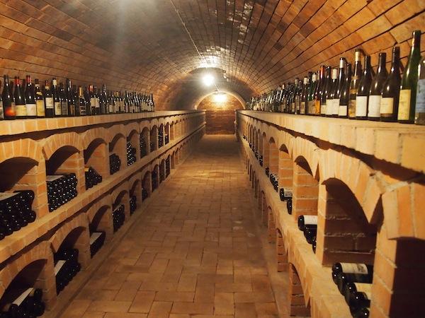 Im Rahmen unseres Besuches lernen wir die gesamten Keller- und Weinsortimente der Familie Frank kennen und bleiben über drei Stunden zu Besuch: So gut hat es uns hier gefallen!