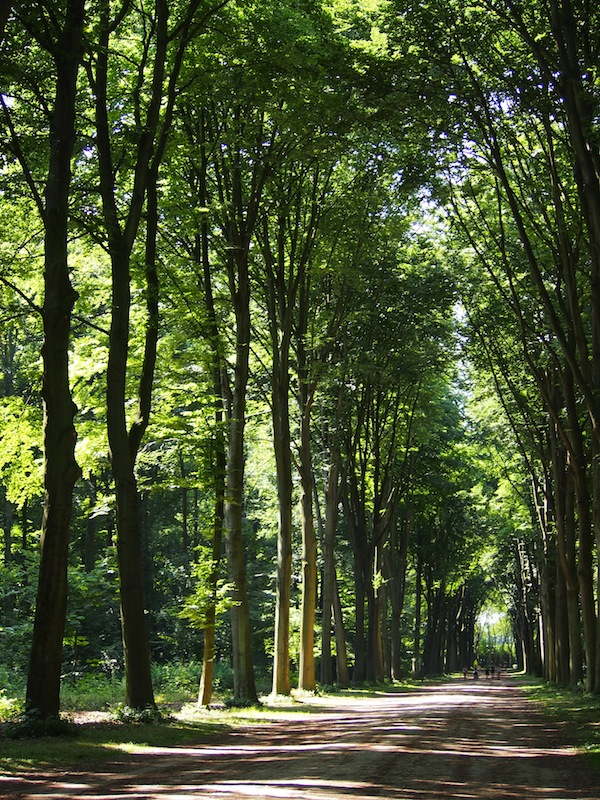Die traumhafte Allee mit ihren riesenhaften Parkbäumen lädt zum Träumen und (im Sommer kühlen) Flanieren ein ...