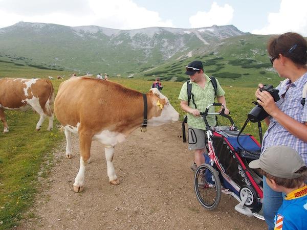 Am Schneeberg ist mit allen gut Kirschen essen: Kühe wie Menschen sind hier sehr freundlich & entspannt. :D