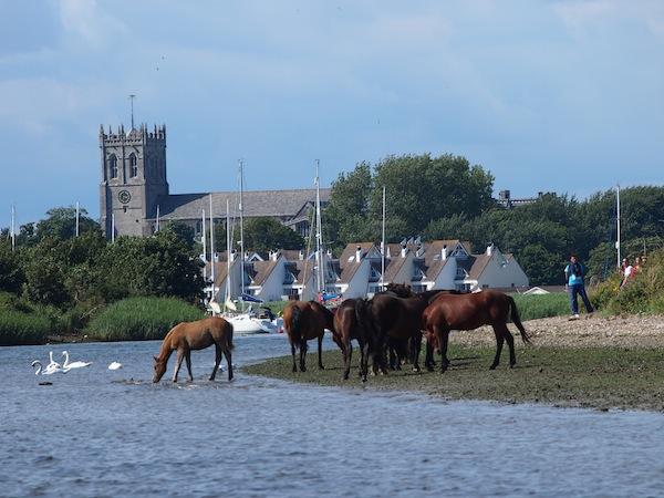 Wilde Pferde am Strand von Christchurch, Südengland beobachten, hat einen ganz eigenen Zauber der unter die Haut geht.