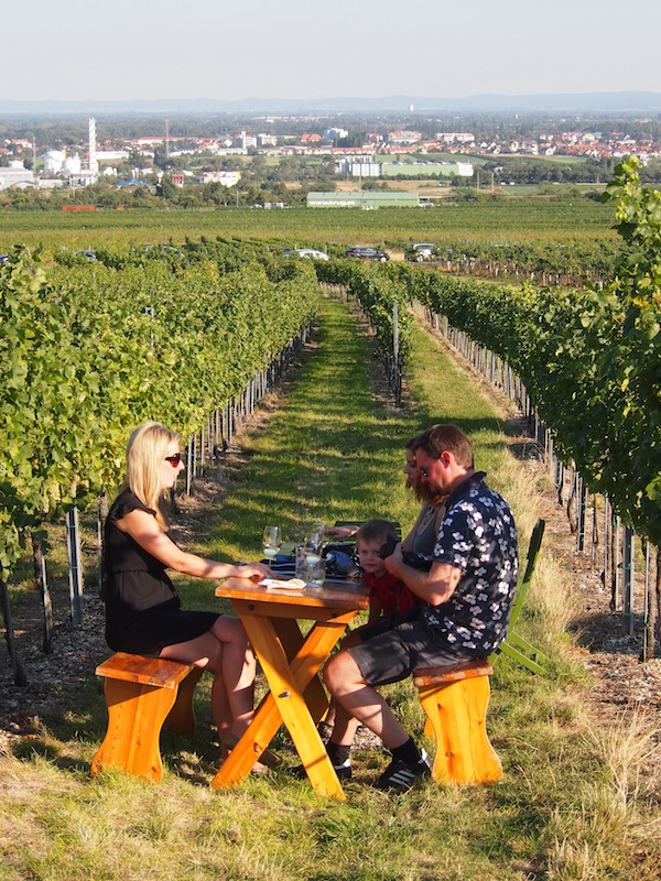 Where else could you possibly find a spot like this, sitting inside a vineyard while overlooking the city of Vienna?