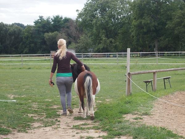 Wenig später folgen wir dieser jungen Dame (und ihrem Begleiter) bereitwillig: Anna & ich auf dem Weg zur Reitstunde auf der Family Ranch gleich neben dem Apfelhof.