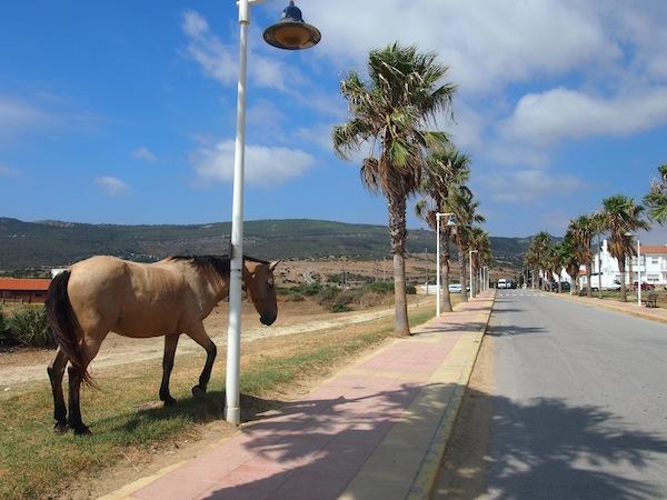 """Ortseinfahrt in Bolonia: Hier ist alles """"easy-going"""" - auch die Pferde promenieren hier vorbei."""
