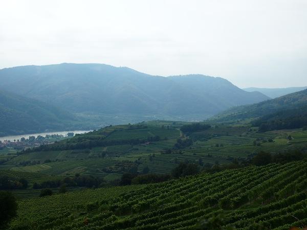 Die gesamte Region ist hier voller Weingärten - Ein Traum, das Donautal im Abschnitt der Wachau zwischen Melk & Krems.