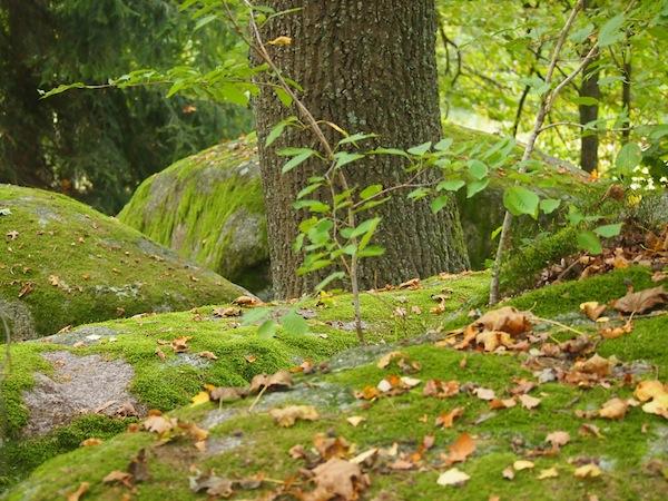Die Mystik des Waldviertels spüren lernen ... Das ist unser schönes Fazit für den Ausflug in den hohen Norden Österreichs.