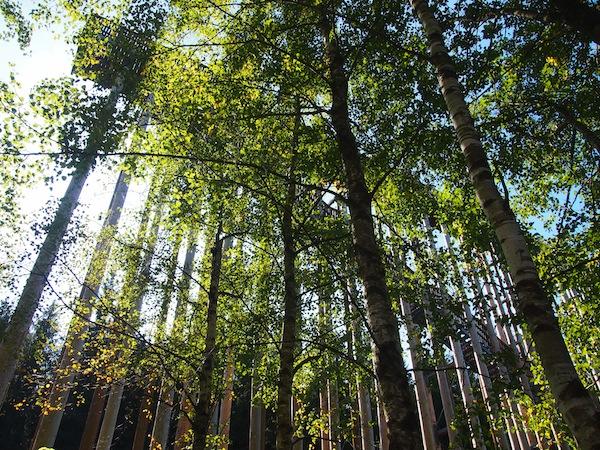 """Die Himmelsleiter reicht mitten in den Baumwipfeln direkt """"in den Himmel"""" und bietet eine moderne Aussichtsplattform der Extraklasse."""