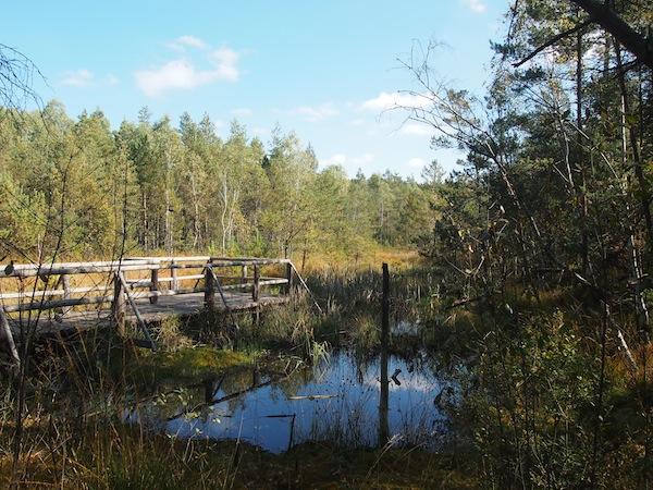 Gute Aussichten: Im Hochmoor Schrems lernen wir alles über die natürlichen Gegebenheiten dieser eigentümlichen Torflandschaft.