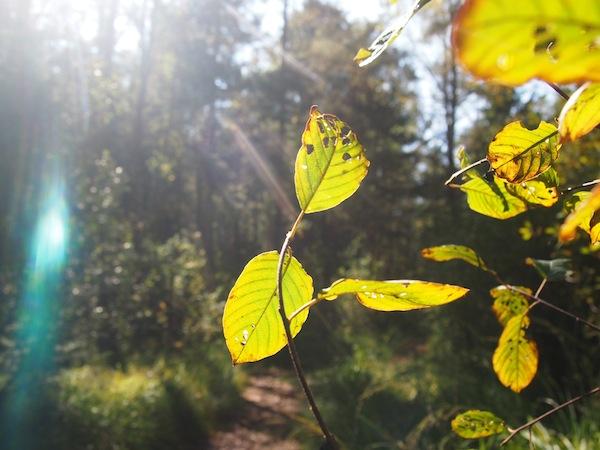 ... und so schön warm, an diesem perfekten Herbsttag im Waldviertel.