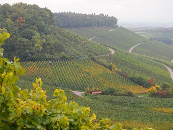 Ist sie nicht wunderschön, die Weinlandschaft hier? Die sanft abfallenden Weinberge mit ihren bewaldeten Kuppen hier im WeinSüden von Baden-Württemberg erinnern mich sowohl in Farbe als auch in Form gar ein wenig an meine Heimat, das niederösterreichische Kamptal-Weinbaugebiet.