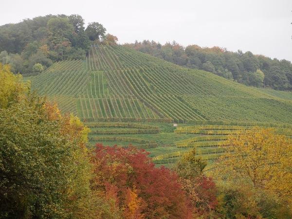 Seht Euch diese traumhafte Landschaft an ... Gerade jetzt im Herbst leuchten die Farben des RadSüden Baden-Württemberg besonders schön.