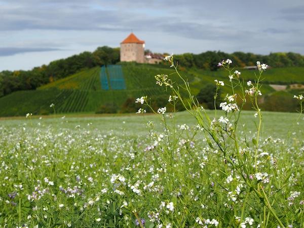 Immer wieder sind wir angesichts der landschaftlichen Schönheiten unserer Route versucht, stehen zu bleiben ..