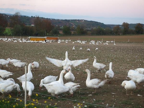 ... und demonstrieren ihr Alltagsglück hier im Südburgenland sehr gerne.