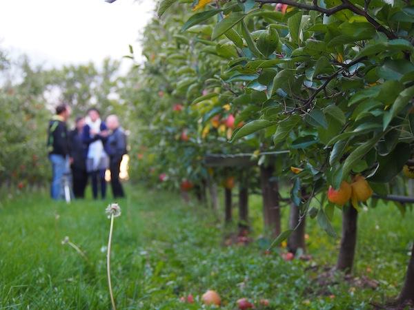 Da kommt Freude auf: Zu Besuch im Sinnesparadies, einem zart duftenden, reifen Apfelgarten mitten im nordburgenländischen Seewinkel.