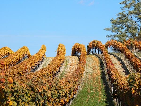 Sonnige Lagen verleiten zu ausgedehnten Spaziergängen ... hoch lebe die Wein- und Obstbauregion des nördlichen Burgenland!