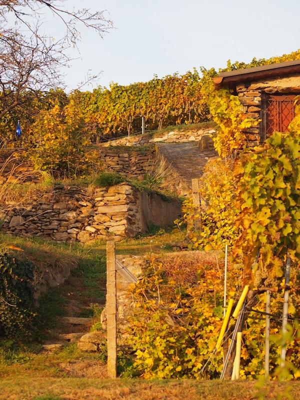 Lieblingsbild Nr. 5: An den sauber gearbeiteten Steinterrassen sieht man die jahrhundertealte Tradition des Weinbaus hier in der Region.