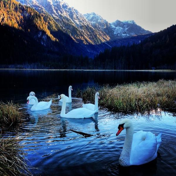 """Vor kurzem ist mir diese """"sagenumwobene"""" Aufnahme gelungen, und zwar am Jägersee im Salzburger Land nahe der Kreativ-Destination Altenmarkt-Zauchensee ... Einfach WUNDERSCHÖN. !"""