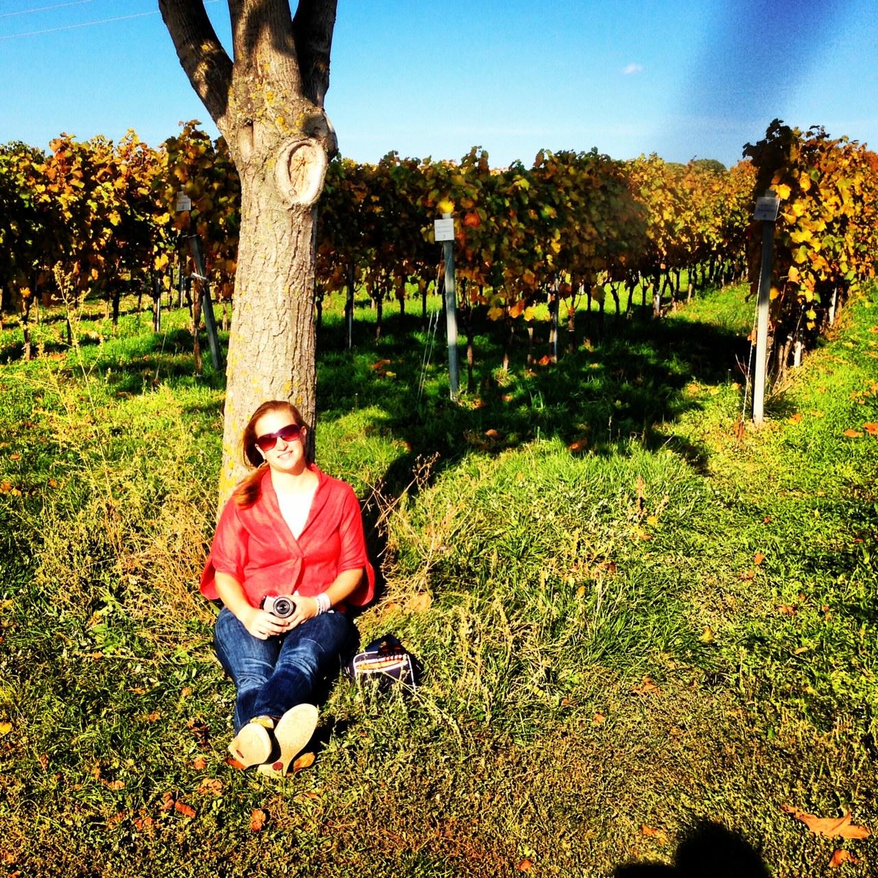 Gemütlich ausspannen kann man um diese Jahreszeit besonders schön, zum Beispiel in der Nachmittagssonne an einen Nussbaum inmitten der Weingärten des Nordburgenlandes gelehnt ...