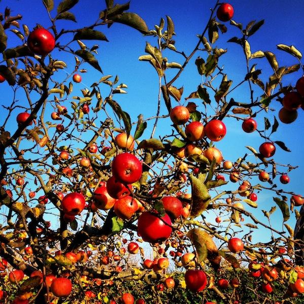 Am besten schmecken immer noch ... die Äpfel aus dem eigenen Garten. Ja wirklich! Auch wenn's kitschig klingt - keine Äpfel mag ich lieber als die von Mamas Garten. :D