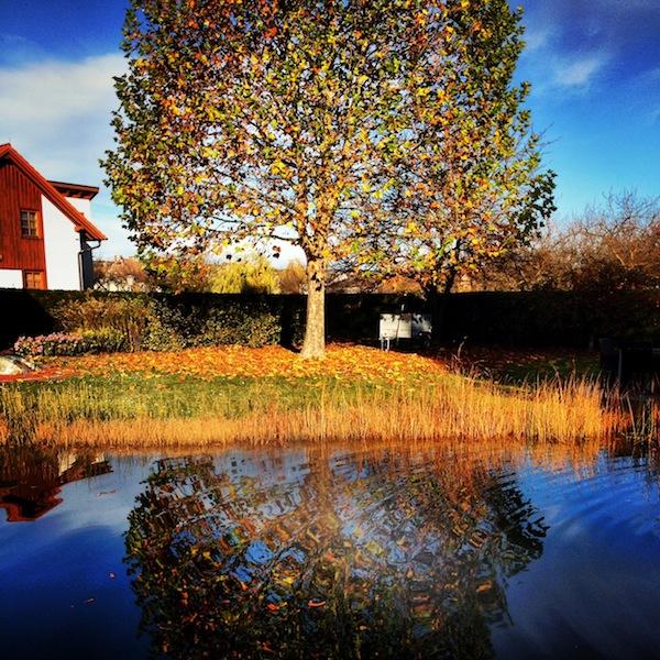 Noch ein Blick in Mama's Garten: Die große Platane liefert ihr Kopfzerbrechen (ob der vielen Blätter, die alljährlich im Schwimmteich landen!) und mir wunderschöne Fotomotive ... ! Danke, Mama :)