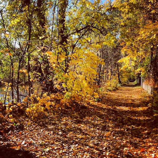 Auch Fitness darf im Herbst nicht fehlen: Hier zeige ich Euch eine meiner liebsten Laufstrecken entlang der Donau-Auen in Krems. Mmmh riecht's da gut!
