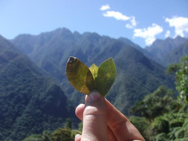 """Nachhaltigkeit auf Reisen bedeutet mir auch """"nachhaltiges Gedankengut"""": Beispielsweise habe ich hier in Peru am Machu Picchu gelernt, am Templo de la Luna Pachamama (Mutter Erde) eine Darbietung aus Coca-Blättern zu machen. So machen es die Peruaner schon seit Menschengedenken - das Ritual und das Verständnis für einen Ort leben somit fort."""