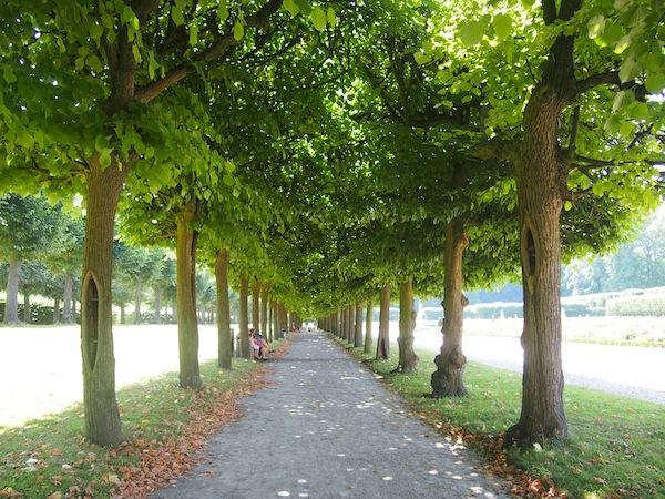 Die wunderschönen Alleen und Parkanlagen der Schlösser von Brühl haben es mir angetan.