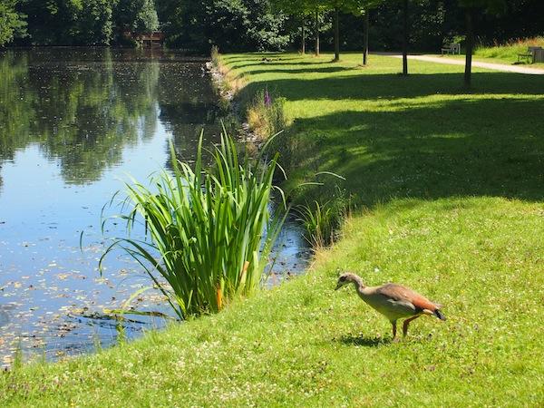 """Die Übersetzungen beinhalten auch teils kuriose, wohl gemeinte Sätze wie: """"Nur Eindrücke und Beobachtungen sammeln, keine Pflanzen oder Tiere."""" Wer nähme schon so eine süße Ente aus dem Park mit nach Hause?"""