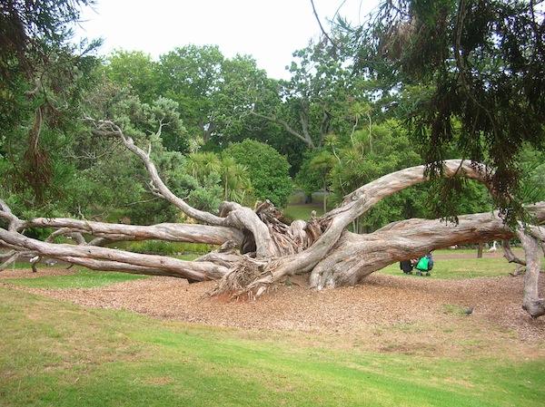 Was mag diesem Baum passiert sein? Natur inmitten der Großstadt gibt schöne Rätsel auf.