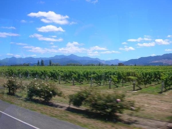 Ich setze den ersten Fuß auf Neuseelands Südinsel und sehe … Wein. Wohin das Auge reicht. Schon mal vielversprechend als alte, österreichische Weinliebhaberin ;)