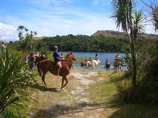 … bis zur Gelegenheit, im Hinterland auf abenteuerliche Reitgesellschaften zu treffen: Das Gebiet im & um den Abel Tasman National Park ist wahrlich eine Freude.