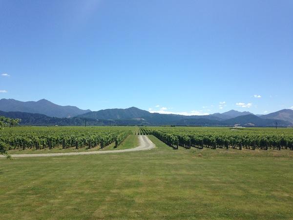 Meine Weingüter lieb' ich mir! Hier sind wir im Marlborough ganz im Norden von Neuseelands Südinsel unterwegs. / Foto: Anna Zell
