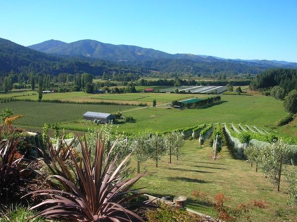 Kennen gelernt habe ich die Familie beim Birnenpflücken übrigens durch die Besitzer dieses Weinguts im Motueka Valley, welches hier romantisch auf einem kleinen Hügel mit Blick in diese Landschaft thront. Hier müsst
