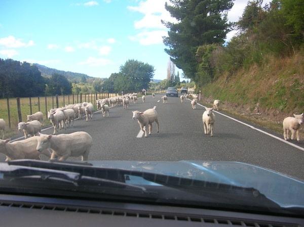 Beim Reisen auf der Südinsel Neuseelands sind Anblicke wie diese keine Seltenheit.