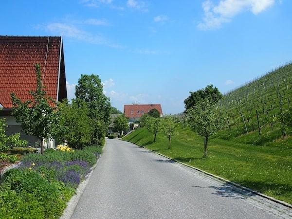 Los geht's: Nachdem wir uns im Hotel Gut Pössnitzberg von allen kulinarisch-kreativen Abenteuern erholt haben, besuchen wir das Weingut und die Kellerei der Familie Polz am Morgen.