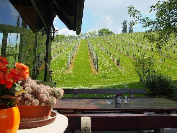 Gleich neben dem Weingut befindet sich die Buschenschank Polz, betrieben von der charmanten Familie Kohlenberger mit wahrlich exzellenter Küche.